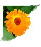 Huisartsenpraktijk Therapeuticum Calendula